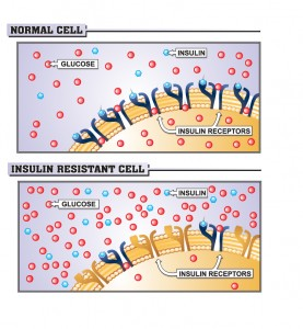 insulin-cell-[Converted]