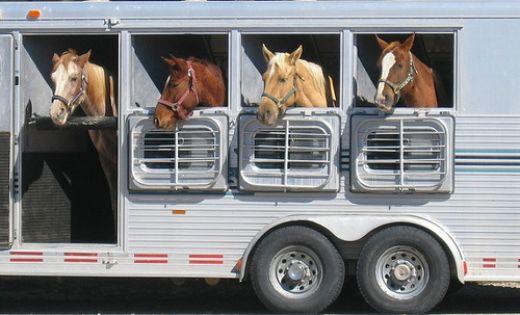 horse_tailer_world