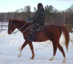 Snow is no problem for barefoot horses