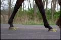 3Mismatched-Hooves